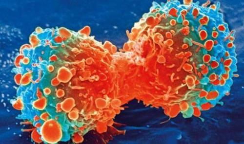 CUO KILL CANCER CELL
